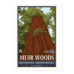 Muir Woods National Monument 3 Post Card