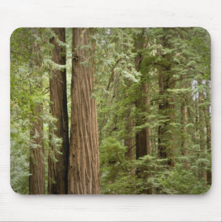Muir Woods National Monument, Northern Mouse Pad