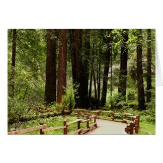 Muir Woods Path I Card