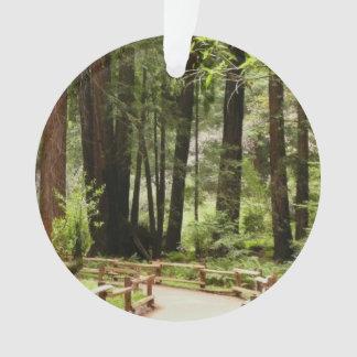 Muir Woods Path I Ornament