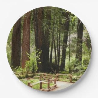 Muir Woods Path I Paper Plate