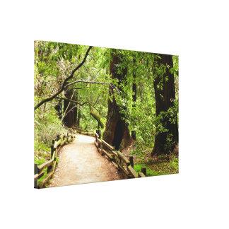 Muir Woods Path II California National Monument Canvas Print
