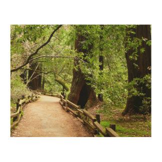 Muir Woods Path II Nature Photography Wood Wall Art