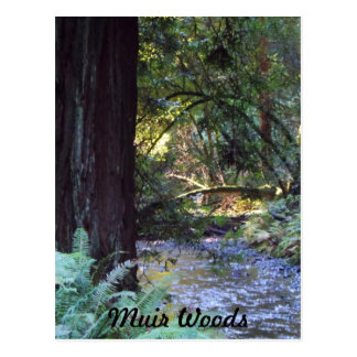 Muir Woods Stream Postcard