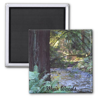 Muir Woods Stream Square Magnet
