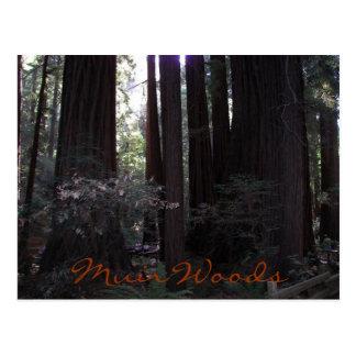 Muir Woods Travel Photo Postcard
