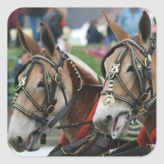 mule days square sticker