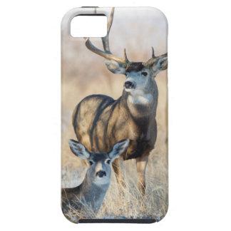 Mule Deer Buck and Doe iPhone 5 Cover
