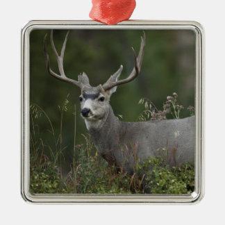 Mule Deer buck browsing in brush Christmas Ornament