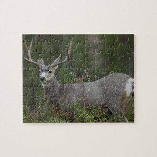 Mule Deer buck browsing in brush Jigsaw Puzzle