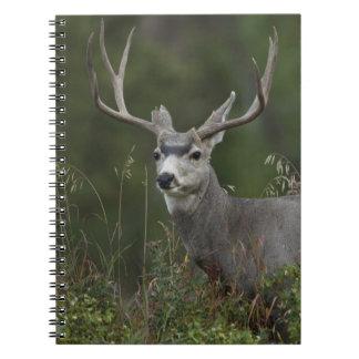 Mule Deer buck browsing in brush Notebooks