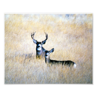 Mule Deer Buck & Doe Digital Fine Art Print Photo