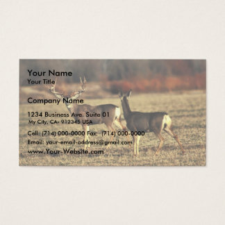 Mule Deer Business Card