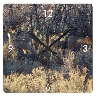 Mule deer clock