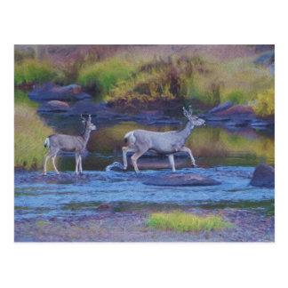 Mule Deer Doe and Fawn Postcard