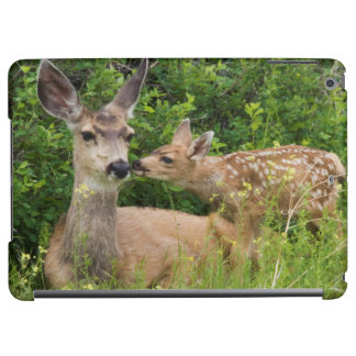 Mule Deer Doe with Fawn 2
