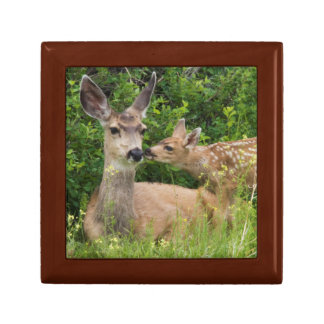 Mule Deer Doe with Fawn 2 Gift Box