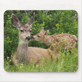 Mule Deer Doe with Fawn 2 Mouse Mat