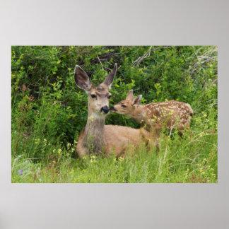 Mule Deer Doe with Fawn 2 Poster