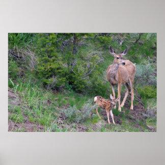 Mule Deer Doe with Fawn 3 Poster