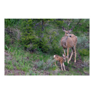 Mule Deer Doe with Fawn 3 Poster
