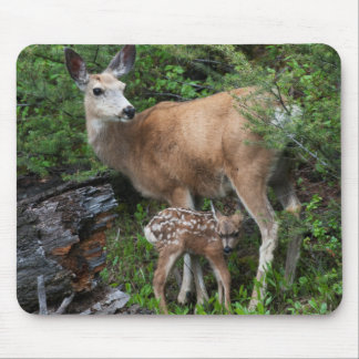 Mule Deer Doe with New Born Fawn Mouse Mat