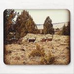 Mule Deer Does Mouse Pad