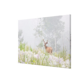Mule Deer in Foggy Meadow Canvas Print