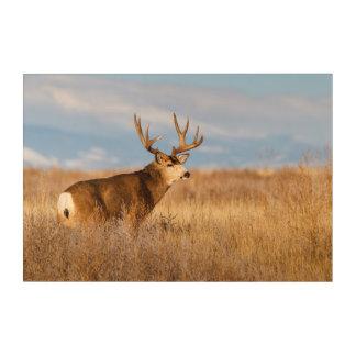 Mule Deer in Winter Grassland Acrylic Wall Art