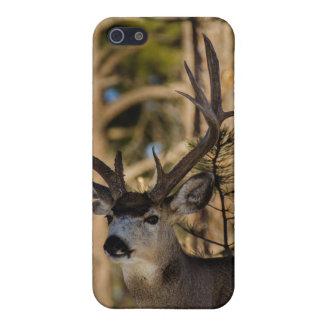 Mule deer Iphone case iPhone 5 Case