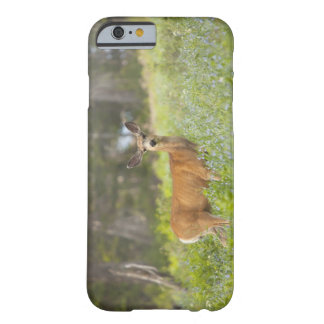 Mule Deer (Odocoileus hemionus) in meadow Barely There iPhone 6 Case