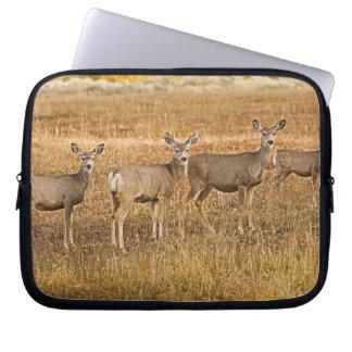 Mule deer (Odocoileus hemionus) One on left with Laptop Sleeve