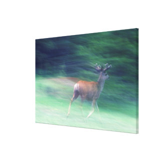 Mule Deer Running Canvas Print