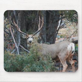 Mule deer spur buck mousepads