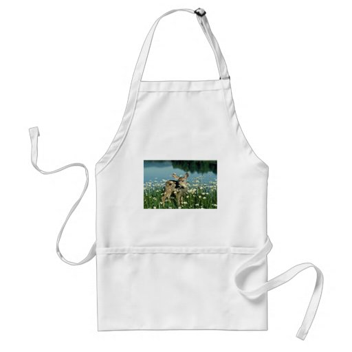 Mule Deer-young fawn in field of wite daisies by r Apron