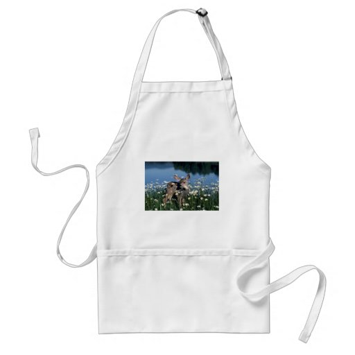 Mule Deer-young fawn in field of wite daisies by r Aprons