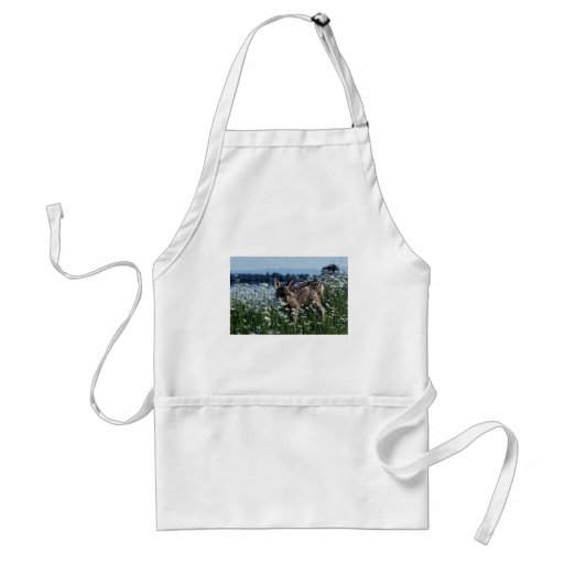 Mule Deer-young fawn in green field of white daisi Aprons