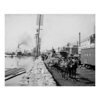 Mule Teams on the Levee, New Orleans: 1903 Poster