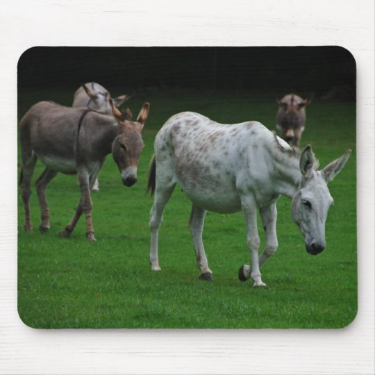 Mules And Donkeys Mousepad