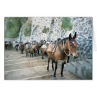 Mules in Greece Greeting Cards