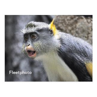 Muli-colored Wolf Monkey Postcard