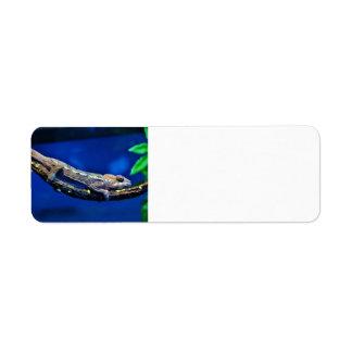 Multi-Colored Chameleon Return Address Label