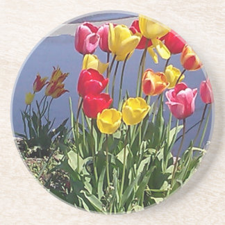 Multi-Colored Tulips CAM00235.jpg Drink Coasters