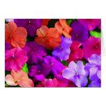 Multi Colour Flowers Card - blank
