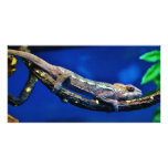 Multi-Coloured Chameleon Photo Cards