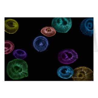 Multi coloured jelly fish on black background card