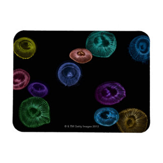 Multi coloured jelly fish on black background rectangular photo magnet