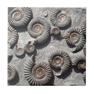 Multi fossil ammonites from the Lower Lias Tile