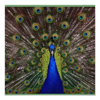 MULTI PURPOSE  Peacock Invitation