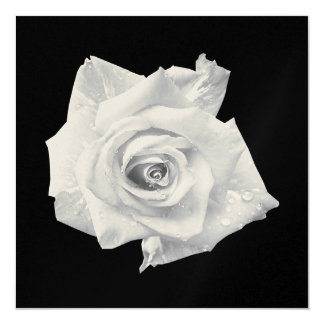 MULTI PURPOSE WHITE ROSE  Invitation